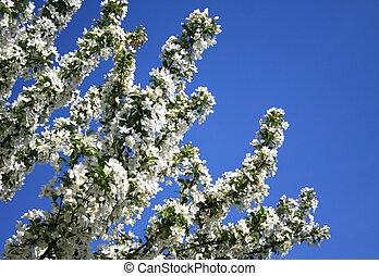 Spring time bloom