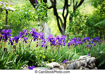 Spring time: blue iris flowers in the forest