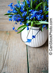 Spring time - Blue spring flowers Scylla, bouquet on table