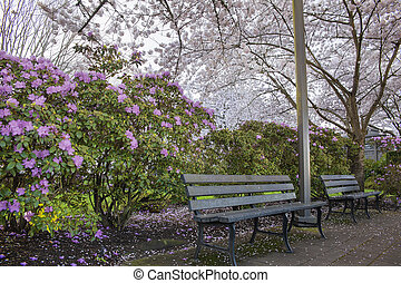 Spring Time in the Park