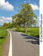 spring time or springy alley and road, springtime view