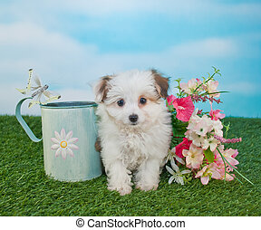 Spring Time Puppy