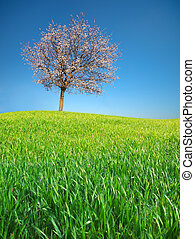 Spring tree and meadow.