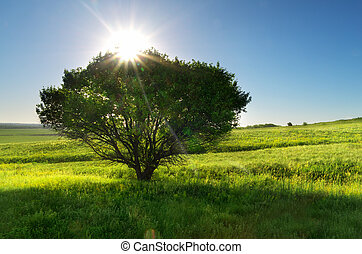 Spring tree and meadow