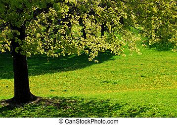 Backlit spring tree