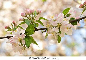 Spring tree flower set.