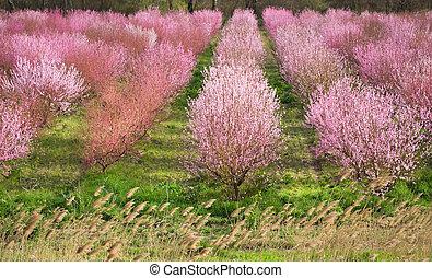spring tree garden - Richly blossoming spring tree garden