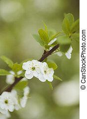 spring tree in blossom