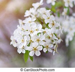 Spring tree in flower.