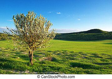 Spring tree in green meadow