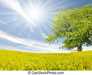 spring tree in the rapeseed field