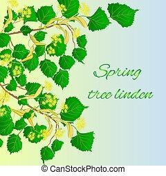 Spring tree linden Spring green