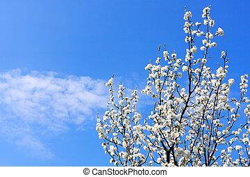 Spring tree on blue sky