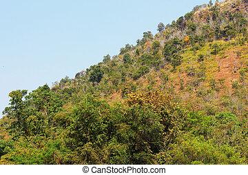 Spring tree on the mountain
