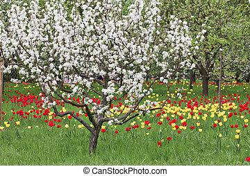 spring, tree