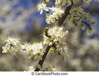 Spring tree with beautiful flowers