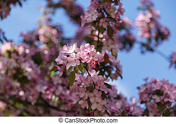 Spring tree with pink flowers in the garden on a sunny day. Blooming branches of the peach tree, blurred background