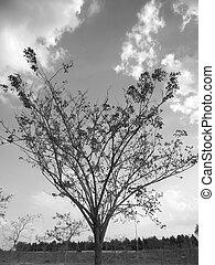 Spring tree with sky