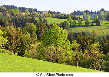 Spring Trees and Meadows in the Hills