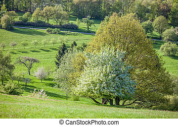 Spring trees in the Taunus mountains near Engenhahn, Hesse, Germany
