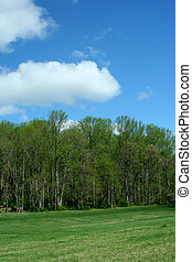 Spring trees with blue sky