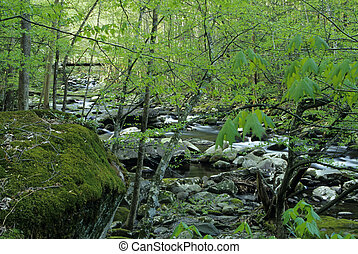 Spring, Tremont - Spring Folage, Tremont, Great Smoky Mtns...