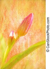 Spring Tulip - pink tulip flower with artistic texture