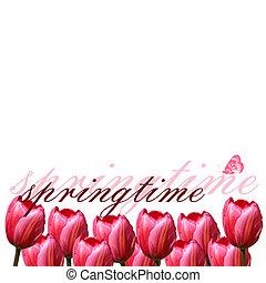spring tulips border
