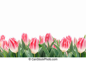 Spring tulips flowers in green grass