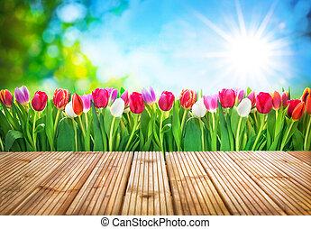 spring tulips flowers