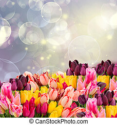 spring tulips on colofful blue bokeh