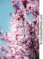 spring twig with pink flowers on the blue sky background