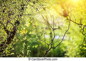 Spring Vegetation Background