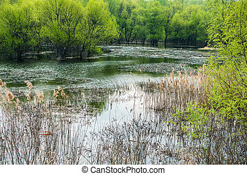 Spring view of lake with rush, trees and plants