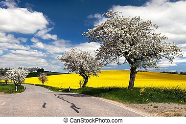 spring view of road with alley