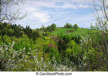 Spring view with natural flowery frame
