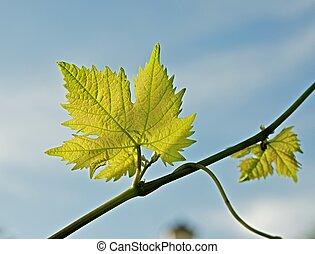 Spring vine