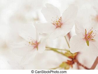 Spring white blossom