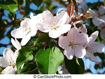 Spring white flowers blossom