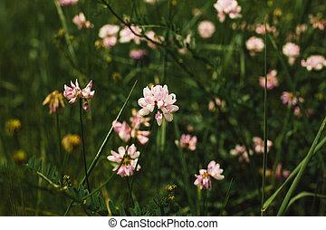 Spring wild flower background. Meadow wildflower. Gorizontal image