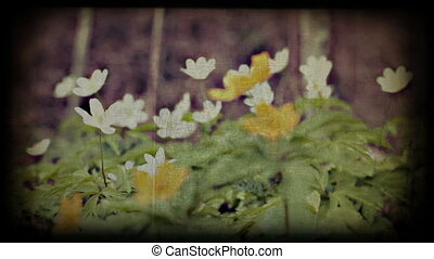 Spring wild flowers in forest, vint