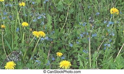 Spring wildflowers.