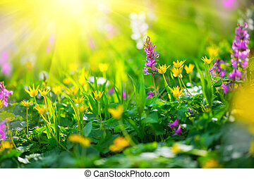 Spring wildflowers. Nature meadow field with wild flowers
