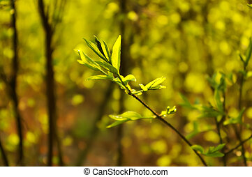 Spring wood - Spring background with younf leaves on the...