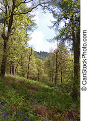 Spring woodland - A spring woodland scene in Queen Elizabeth...