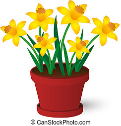daffodils - spring yellow daffodils growing in red pot