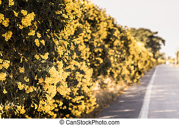 yellow flowers on a fence