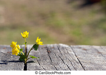 Yellow flowers on wooden background