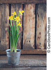 Spring yellow narcissus in the iron pot over the wooden background with a copy space. Easter postcard concept.