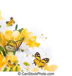 Spring yellow primrose and butterfly, floral background